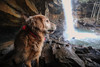 9/52 George returns to Cucumber Falls (J Helsel) Tags: cucumberfalls ohiopylestatepark pennsylvaniastateparks fayettecounty goldenretriever pennsylvaniawaterfalls 5dmarkiv canon wideanglelens 52weeksfordogs