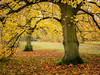 Remembering Autumn (davepickettphotographer) Tags: angleseyabbey nationaltrust wwwnationaltrustorguk trust property autumn autumnleaves uk cambridgeshire lode village gb east eastofengland eastern region england trees autumnal