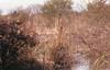 praktica Bx20013 (Fabio.Buoso) Tags: caorle san gaetano paesaggio rurale laguna skyline natura film camera praktica bx 20 35 mm