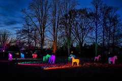 palomino (Sabinche) Tags: winterlights colourful hometown frankfurt outdoor olympus sabinche