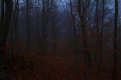 (Pentastar In The Style Of Demons) Tags: canon 5dmk2 ef24105f4 forest mountain winter nature landscape