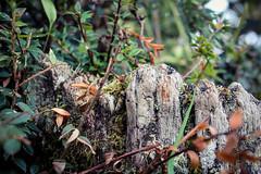 A tree stump in a field (benjamin.t.kemp) Tags: nature tree stump detail closeup greenery colour ecuador hidden secret moss vegetation