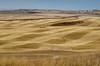 Harrowed Patchwork Field (pokoroto) Tags: harrowed patchwork field アルバータ州 alberta canada カナダ 10月 十月 神無月 かんなづき kannazuki themonthwhentherearenogods 平成29年 2017 autumn october