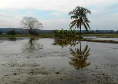 reflets (Paradiperdu) Tags: reflexion réverbération reflets eau nature paysages thaïlande