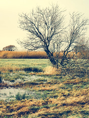 Fiskebäck (agnetaberlin) Tags: sverige sweden sony gothenburg landscape landskap träd tree fiskebäck goteborg göteborg