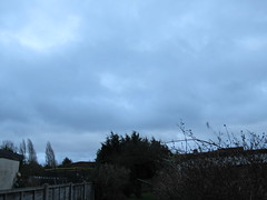 Wednesday, 24th, Strong gusts of wind IMG_2268 (tomylees) Tags: essex morning winter january 2018 24th wednesday weather windy
