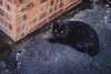 snowflake cat (obwing@ymail.com) Tags: snowflake cat snow black 黑 貓 japan 日本 別府 beppu snowing winter 冬季