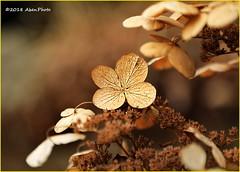 180128 Edwards Gardens (67) (Aben on the Move) Tags: edwardsgardens toronto ontario canada park outdoors nature winter