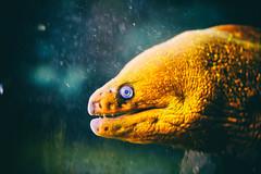The Eels (Thomas Hawk) Tags: america citymuseum citymuseumstlouis missouri stlouis usa unitedstates unitedstatesofamerica eel us fav10 fav25