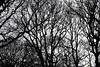 Espace public (Gerard Hermand) Tags: 1802011449 gerardhermand france paris canon eos5dmarkii formatpaysage forêt forest bois wood arbre tree silhouette ciel sky noir black blanc white
