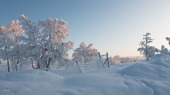 DSC_6636 (allch-photography) Tags: schweden kiruna winterland winter kalt lappland sonne himmel schnee bäume verschneit nikon nikonphotography nikond750 allchphotography
