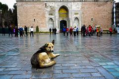 _DSC5361 (TeylorDelight) Tags: istanbul turquia turkey cats dogs grand bazar fisherman galata hagia sophia blue mosque new sultanahmet camii marmaray