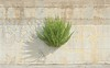 Wall (Carlo Pedretti) Tags: wall surface urbannature urbandecay light shadow zen minimalism dsc3630