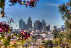 Framed Skyline (Michael F. Nyiri) Tags: elysianpark losangeles skyline cityscape city california southerncalifornia urban park