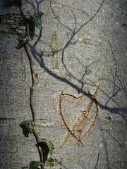 Close to the heart (water castle) Tags: 7dwf closeup nahaufnahme heart herz baum buche tree beech myheartwillgoon flickrfriday