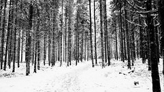 Balade jurassienne (Jeffray12) Tags: cascadesduherisson foret forêt bois neige herisson winter hiver wood sapin franchecompte