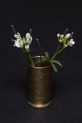 Tiny wild flowers in a 9mm brass casing († David Gunter) Tags: found tiny little flowers vase 9mm brass casing cartridge shell