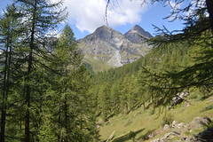 Lago Blu - Val D'Ayas (mettlog) Tags: mountain montagna verde foresta green forest landscape panorama vista veduta pini hiking trakking valledaosta italia italy greenwood wood alberi mombarone piemonte