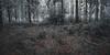 frost 5430 (s.alt) Tags: nature natureunveiled frost winter ice rauhreif cold silhouette bbs branch baum tree ast kalt morgen eiskristall kristallförmig vereist niederschlag hoarfrost whitefrost rime frostyrime wald forest detail macro frozen blatt leaf leaves crystal texture abstract icecrystal frozennature