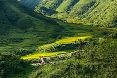 Velký zelený ledovec (zcesty) Tags: řeka vietnam25 terasa rýže pole most krajina vietnam dosvěta laichâu vn