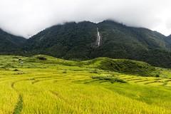 Rýžové zátiší (zcesty) Tags: vodopád vietnam25 rýže pole krajina hory vietnam dosvěta laichâu vn