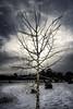 Aspen Glow (Nolan Thornberry) Tags: aspen aspentree snow cloudbreak newsnow snowyaspentree