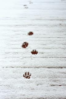 Footbridge, Footprints