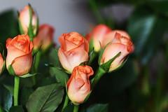 DSC_8854 (PeaTJay) Tags: nikond750 sigma reading lowerearley berkshire macro micro closeups gardens indoors nature flora fauna plants flowers bouquet rose roses rosebuds