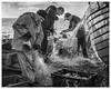 RX55 (AEChown) Tags: fishermen fishermensmuseum fishingboat fishingnets fishingboxes sea thestade hastings seagull fish