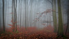 Mystic in the forest (ralfkai41) Tags: nebel landschaft nature mist outdoor wald natur mystisch bäume trees forest woods landscape fog woodlands mystic magical magisch