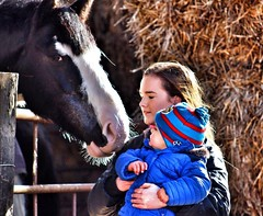 The Kiss by Julie Adams (julz.adams) Tags: stables stonehaven daysout together togetherness family capture outdoors kids people canon100d 100d canon scotland aberdeen trend trending horse horses kiss