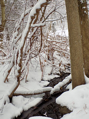 January - Snowy Day 2 (Stans Gallery) Tags: white winter brook stream creek water winterscape landscape snow snowscape snowstorm woods forest trees