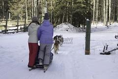 IMG_9320 (zawaski -- Thank you for your visits & comments) Tags: dogsledding ©robertzawaski® fun boundry ranch snowwinter maddogsandenglishman ©2019robertzawaski ©2019 robert zawaski ©2019zawaski finephotography photog ambieantlight beauty