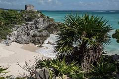 Urlaubsträume (krieger_horst) Tags: tulum mexiko felsen baum meer strand tempel