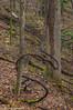 Forest vine. (Ulrich Burkhalter) Tags: 201801014 20180128 connellsvillepa eastparkfalls hollyriverstatepark pa upperhollyriverfalls wv waterfalls westvirginia imgp3291predited1