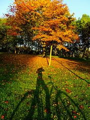Shootin' (voyageurrr) Tags: velo cyclism cycle bike jesien природа ноябрь осень shot shooting photo natura nature green verde vert jaune yellow orange couleurs kleurs colours colors november novembre otoño automne autumn fall