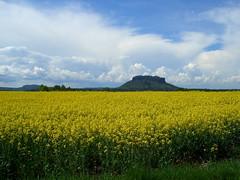 Inseln im gelben Meer (michaelschneider17) Tags: reisen sachsen deutschland natur