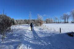 IMG_0225 (rudolf.brinkmoeller) Tags: eifel wandern natur eifelsteig hohesvenn