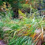 "Cincinnati – Spring Grove Cemetery & Arboretum ""Lush Miscanthus Green Grass In Wooded Area"" thumbnail"