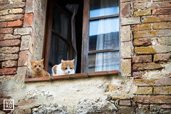 Val d'Orcia | NaDa Fotografie (_annalaura_) Tags: toscana tuscany valdorcia sanquiricodorcia nadafotografie vignonialto vignoni italy travel winter cats curiouscats