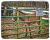 PLEASE DO NOT PET THE ANIMALS . . . (NC Cigany) Tags: cows warning handsome cute fence fearringtonvillage jackass donkey farm galloway mule sign
