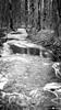 La Bialle qui gèle petit à petit.... (La Pom ) Tags: hiver froid neige savoir haute alpes gel bialle eau combloux sallanches