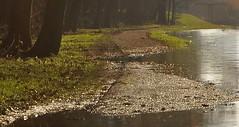 Tegen het licht in / Against the light (wilma HW61) Tags: tegenlicht backlight rétroéclairage controluce hintergrundbeleuchtung brug bridge water wasser wandelpad fietspad hikingpath fahrradweg bicyclepath apeldoornskanaal kanaal channel hezenberg hezenbergbrug hezenbergsluis hattem gelderland gelderslandschap veluwe landscape landschap landshaft view scenery scenario outdoor natuur nature natur naturaleza nikond90 nederland niederlande netherlands holland holanda paísesbajos paesibassi paysbas europa europe winter vinter inverno hiver tree overstroming flood hochwasser hoogwater hightide wilmahw61 wilmawesterhoud