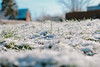 (tanyastrike) Tags: winter grass snow green beautiful sunny sun photo canon50mm ukraine зима снег солнце