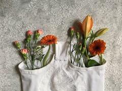 Natura morta (LaSandra.) Tags: sandralazzarini naturamorta flowers mutande slip studio