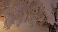 IMG_4343 (Mr Thinktank) Tags: raureif frost