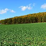 Herbstwald thumbnail