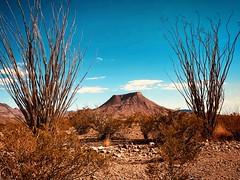 Ocotillo framing a butte, Big Bend Nat Park, Texas (Cooke Photo) Tags: butte highdesert bigbendnationalpark westtexas texas americanwest desert ocotillocactus ocotillo