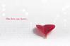 one love... (Emma Varley) Tags: heart leaf red white valentines bobmarley bokeh onelove