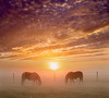 Mirroring (adrians_art) Tags: horses equines nature wildlife weather foggy misty sky dawn sunrise silhouettes shadows light dark gold yellow red orange amber black white